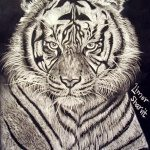 Art: Portraits, drawings, paintings - Tiger drawing