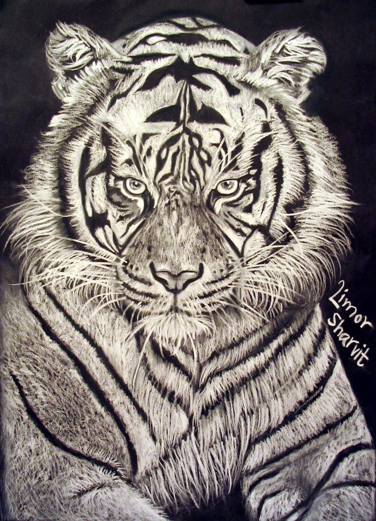 Drawings and paintings - Tiger drawing